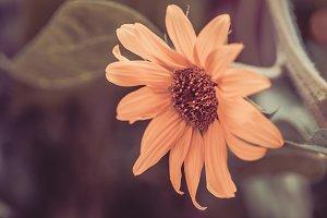 Sunflower vintage style
