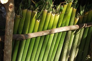 Bamboo water containers