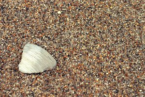 sea shell in sand