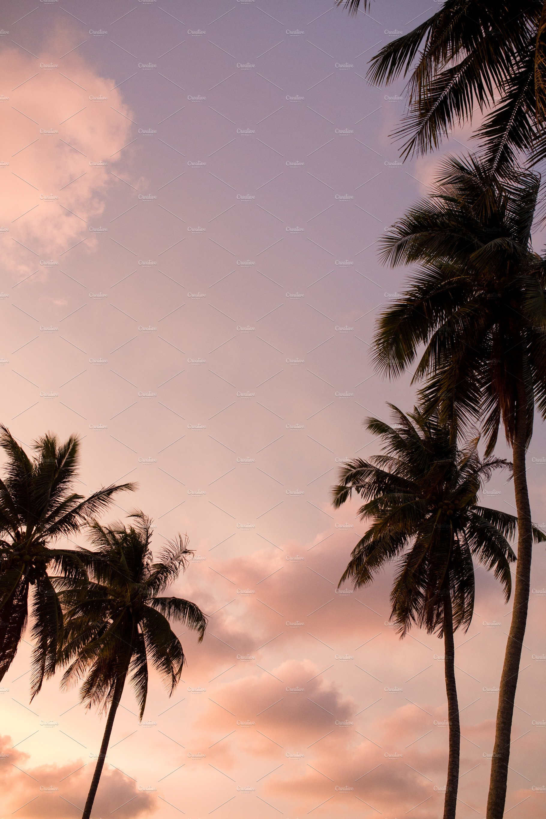 Palm Tree Silhouette And Pink Sunset High Quality Nature Stock Photos Creative Market