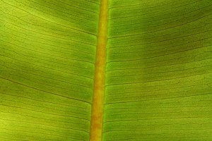 Green Leaf in Extreme Detail