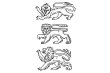 Powerful lions and predators