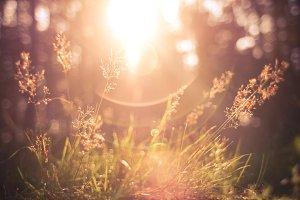 Morning Sunlights
