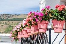 Geranium plant pots