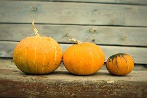 Three bright pumpkins