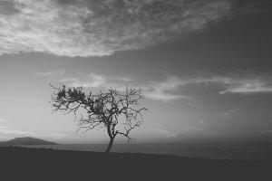 Landscape deah