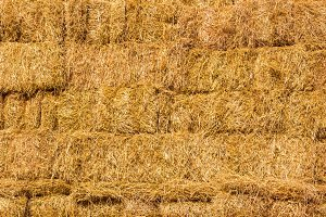 Fresh straw hay bales background