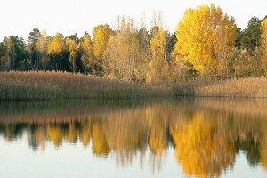Lake Landscape