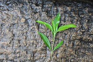 Green leaf on stone path