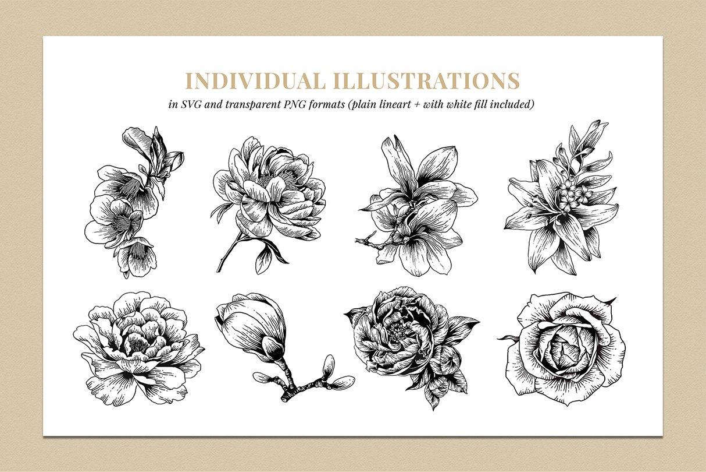 botanik preview individual illustrations