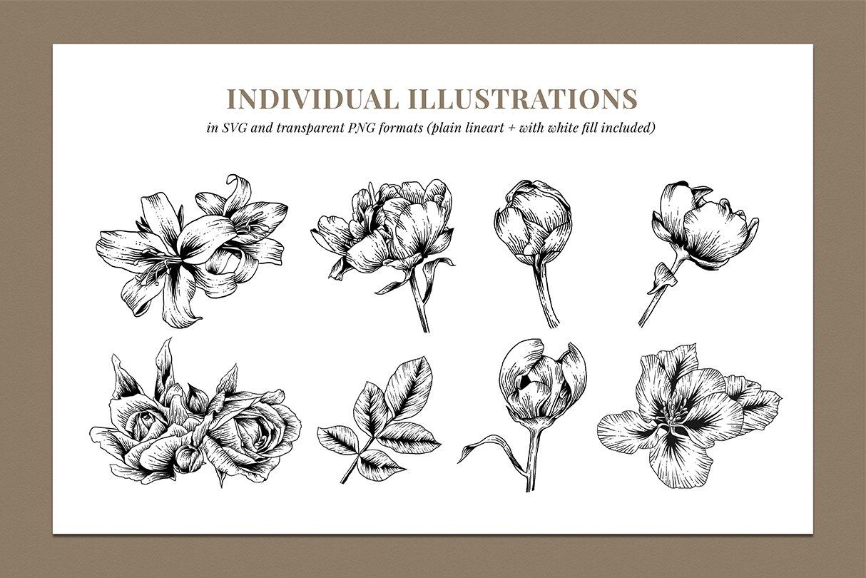 botanik preview individual illustrations 4