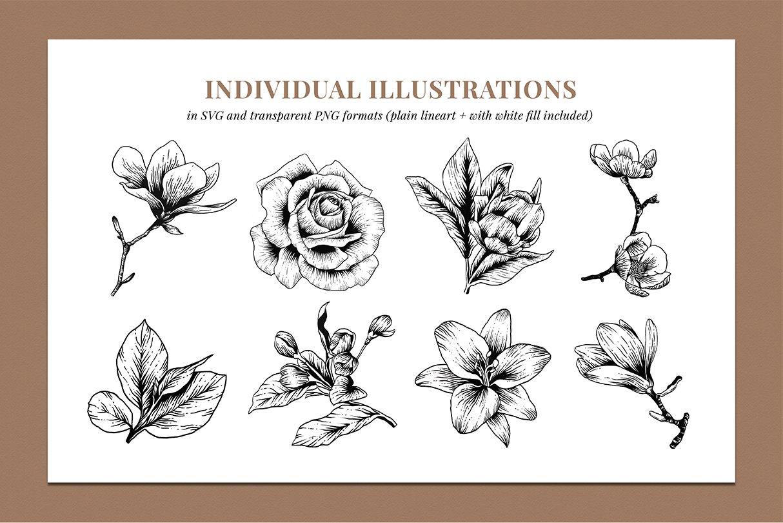 botanik preview individual illustrations 5
