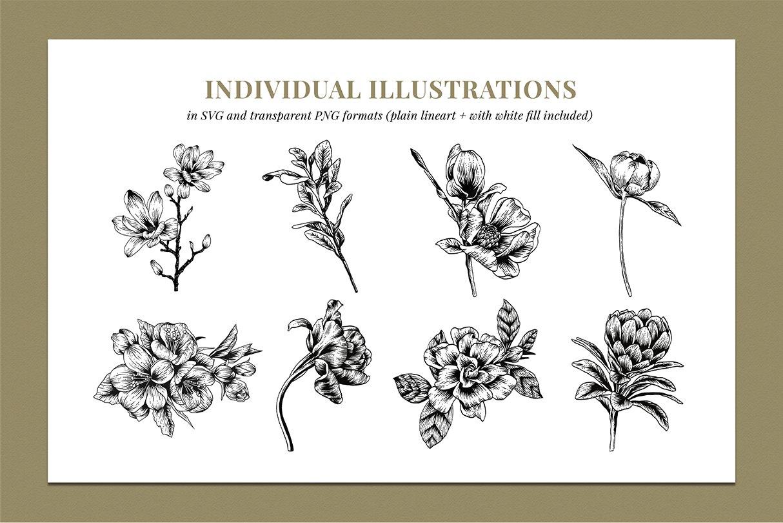 botanik preview individual illustrations 2