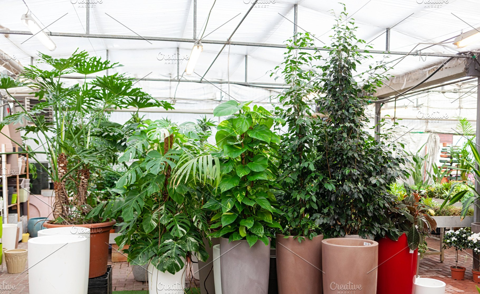 Big Variety Of Big Plants Inside Of High Quality Nature Stock