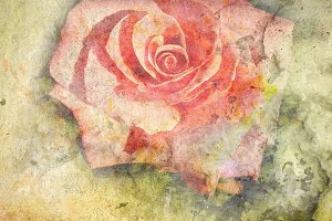 grunge vintage rose background