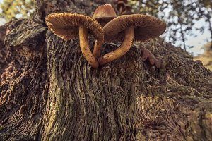 Trunk with Mushrooms