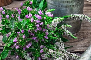Peppermint is perennial herbaceous p