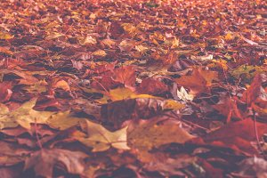 Autumn leaves 1