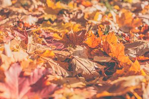 Autumn leaves 5