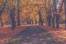 Park in autumn 3