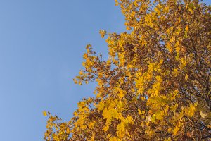Leaves against the sky 3
