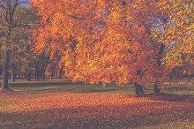 Park in autumn 4