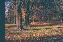 Park in autumn 5