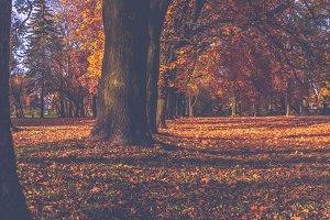 Park in autumn 6