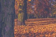 Park in autumn 8