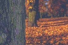 Park in autumn 7