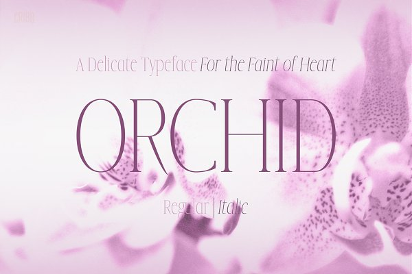 Orchid - Delicate Serif Typeface