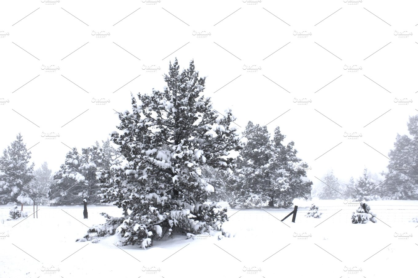 resumes and cover letters winter tree covered with snow nature photos creative 24484 | winter land