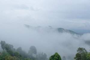 Panorama fog covered trees
