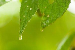 Macro drops of water