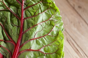 Red Chard Leaf