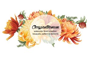Set of watercolor chrysanthemum