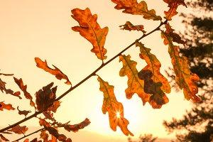 Sun penetrating the autumn leaves