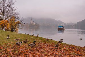 Foggy and mystic autumn at lake