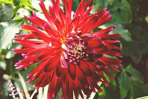 Retro Red Flower