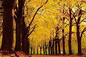 Autumn view of Linden alley