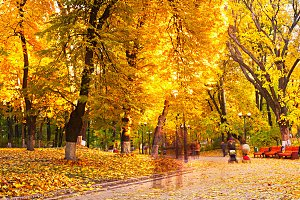 People strolling in an autumn park