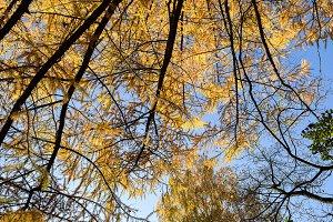 Autumn plexus branches.
