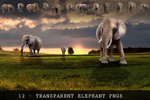 11 - ELEPHANT - Transparent PNGs