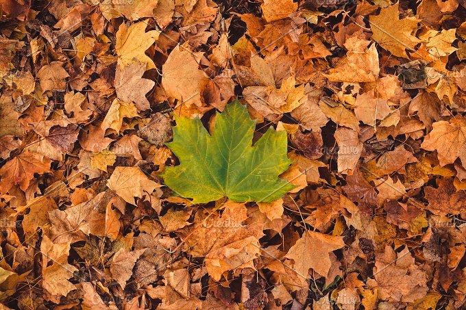 Amazing Autumn Background. Leaves - Nature