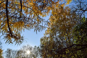 Earlier autumn morning