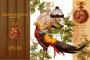 Golden pheasant background