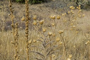 Dry grass and flowers in the meadow.