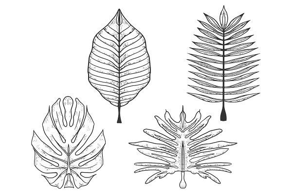 Palm Trees Leaves Set Sketch Vector Pre Designed Vector Graphics Creative Market