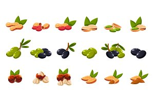 Olives and nuts, vector illustration