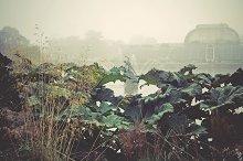 iseeyouphoto kewgardens 4.jpg